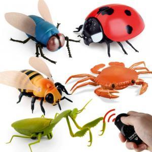 rc insectes