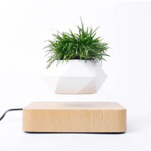 plante de bonsaï flottant magnétique